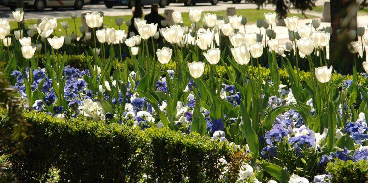 Puesta a punto de los jardines del Ensanche de Vallecas